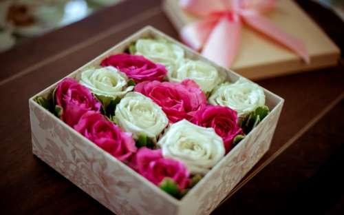 pink white roses box punnet