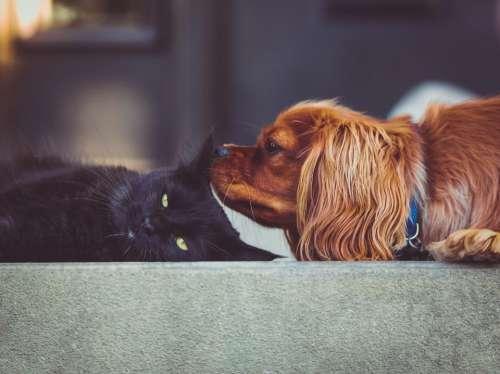 cat kitten dog puppy pet