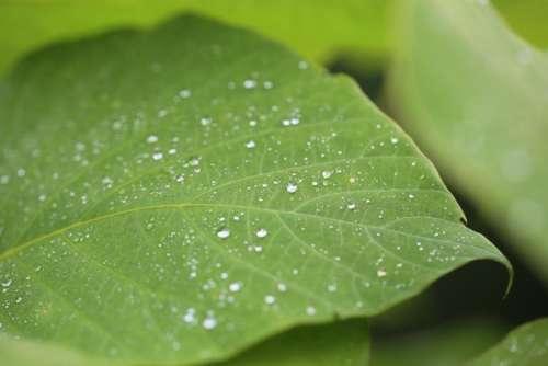 nature landscape green leaves veins