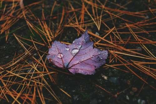 wet leaf purple raindrops outdoor