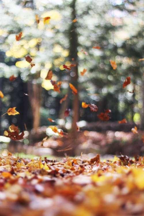 trees plant leaf fall autumn