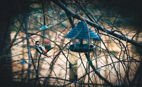 cage bird net food feeds