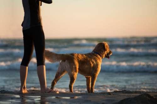 woman dog beach sea ocean