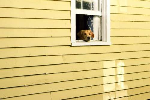 house window pet animal dog