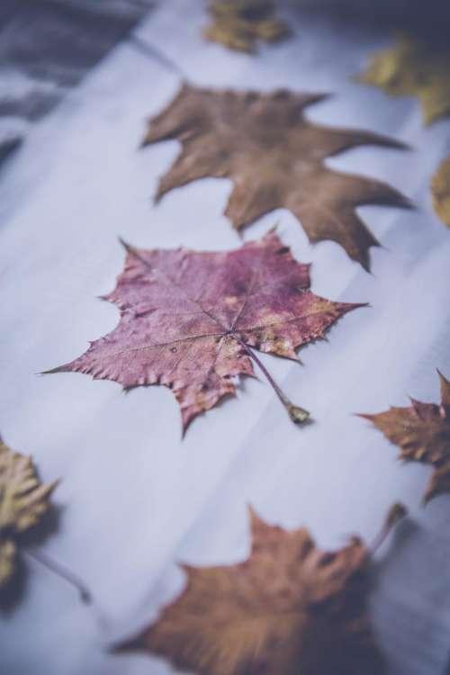leaf fall autumn paper blur