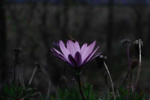purple flower bloom petal nature