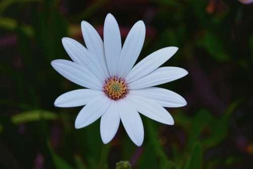 plants flower white green petals