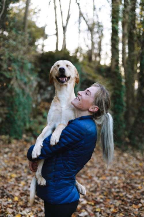 smiling dog dog pet cute animal model