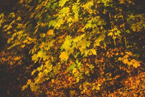leaves fall autumn nature plants