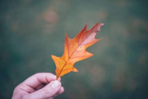 leaf nature fall autumn hand