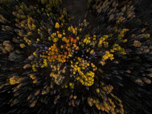 fall autumn trees leaves wood