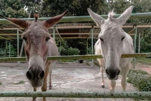animals mammals donkeys pen zoos