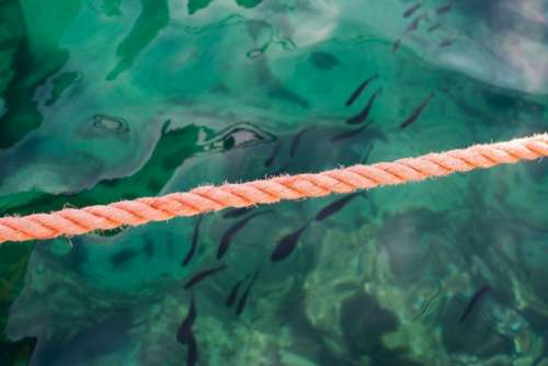 orange rope underwater sea ocean
