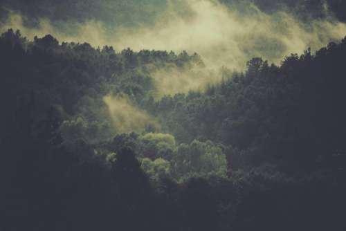 trees forest woods fog nature