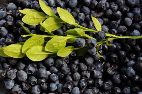 blueberries fruits food healthy