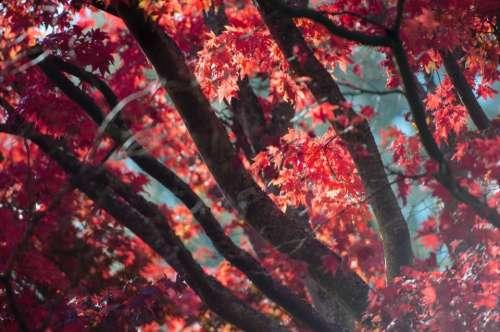 tree plant nature autumn fall