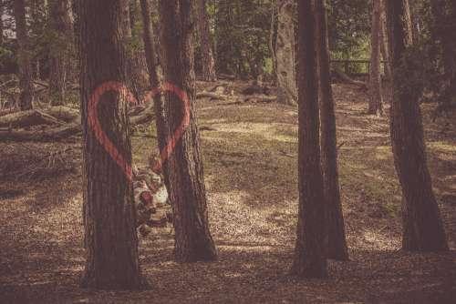 loveheart tree forest love romantic