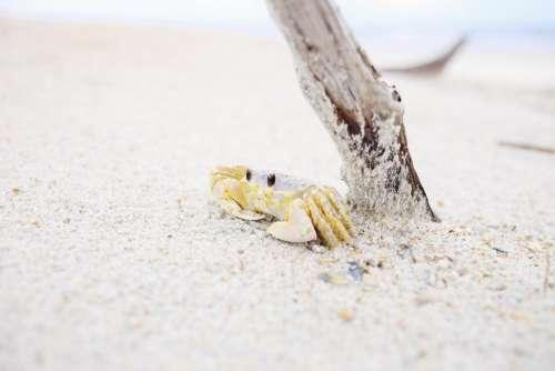 animals crustaceans crabs shells adorable