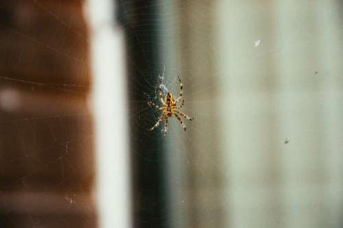 spider web insects animals