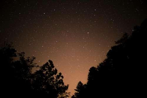trees plant sky stars night