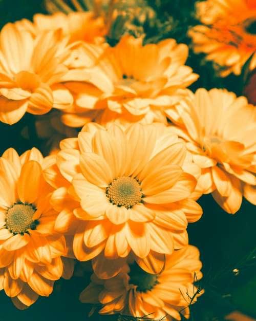 orange flowers garden nature