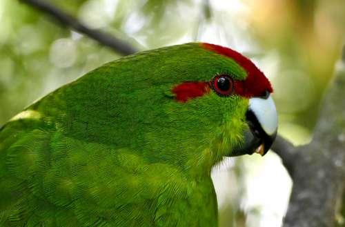 green parrot close up tropical bird