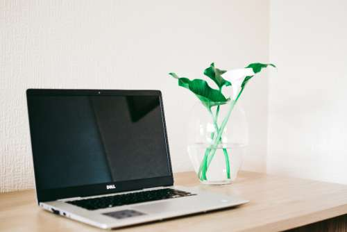 laptop desk flowers lily white