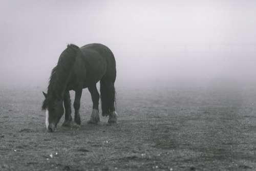 animals horses beautiful mane graze