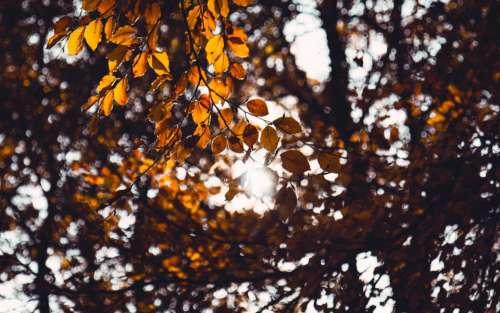 tree leaves plants nature sunlight