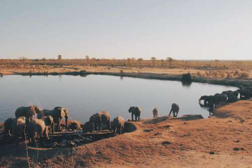 lake water animal wildlife elephant
