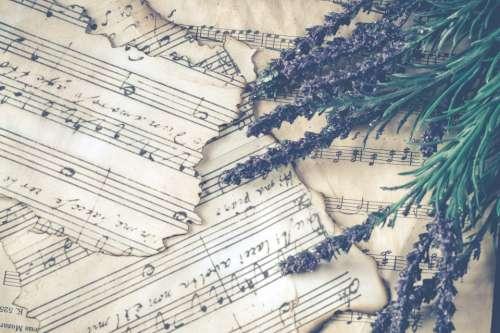 sheet music vintage lavender plant herb