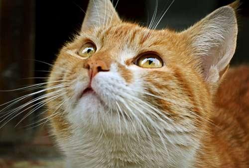 cat pet close up animals fur