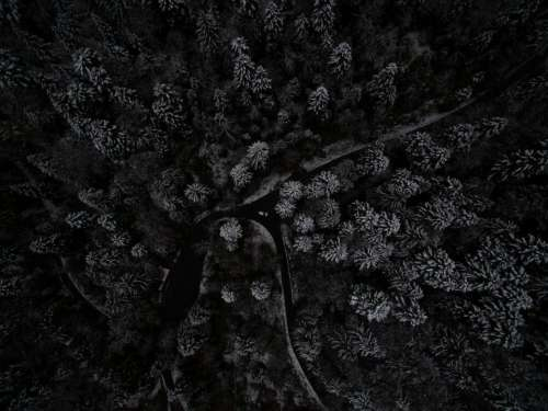aerial view dark night tree