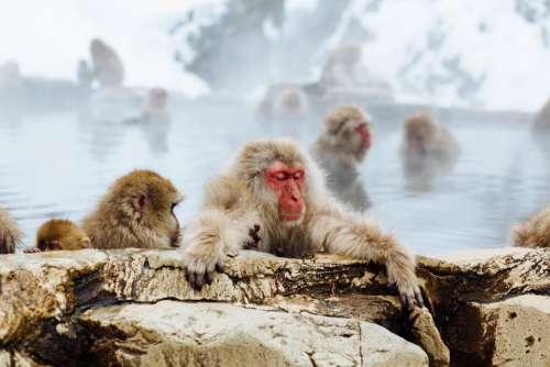 monkey animal pet wildlife sea