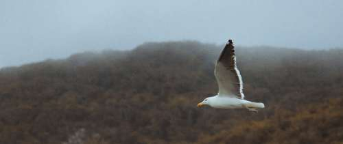 seagull flying high bird animals