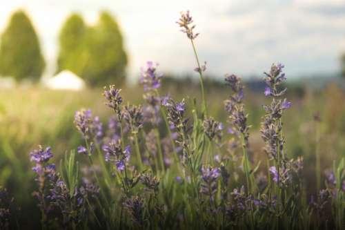 flowers field grass nature rural