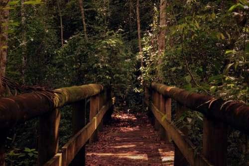 wooden bridge nature dark trees