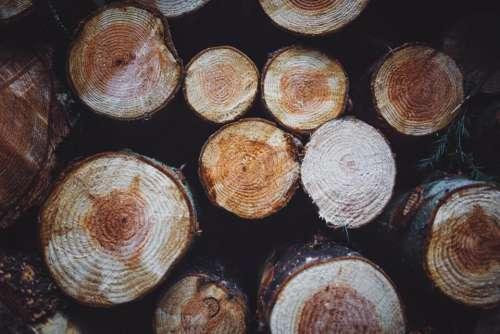 woods logs lumber firewood