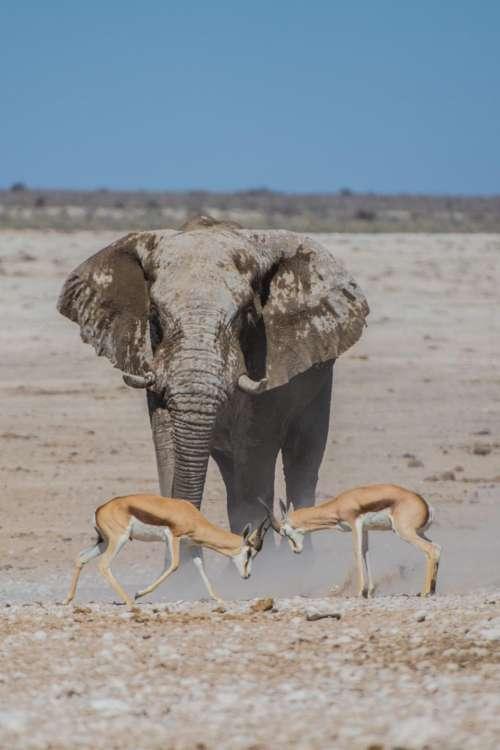 deer horn elephant mammal animal