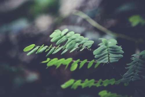 green leaf plant nature blur