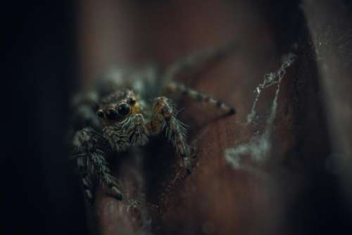 creepy animal insect outdoor spider