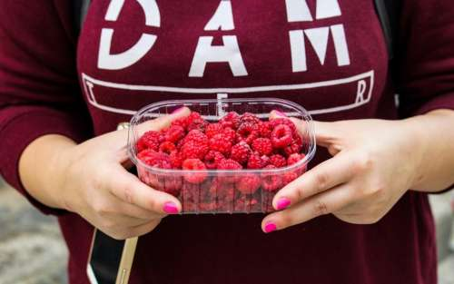 raspberries fruits container hands food
