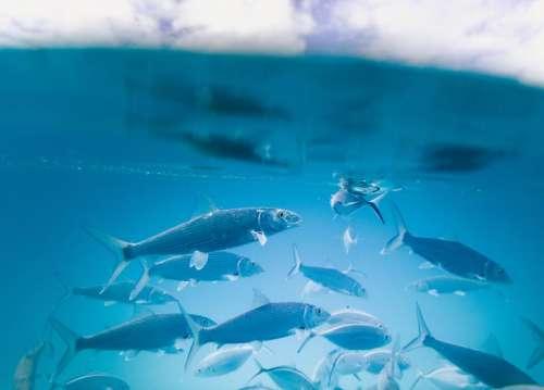 water aquarium fish underwater blue