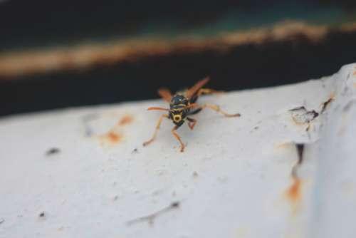 wasp insect nature bug macro