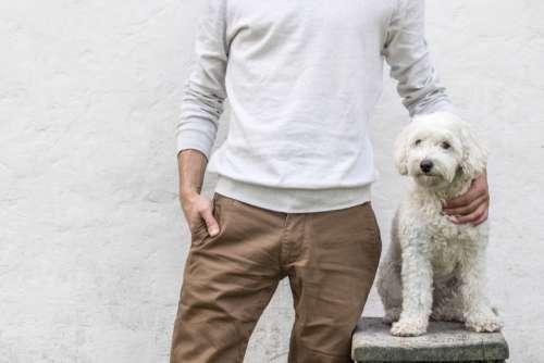 man dog pet standing pose