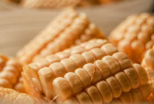 corn cob vegetable food dish