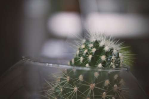 thorn cactus green plant glass