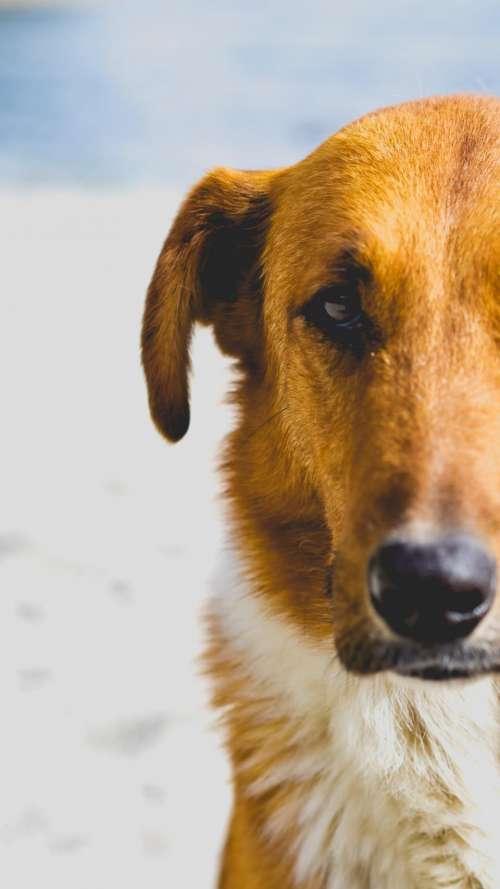 dog animal pet puppy friend