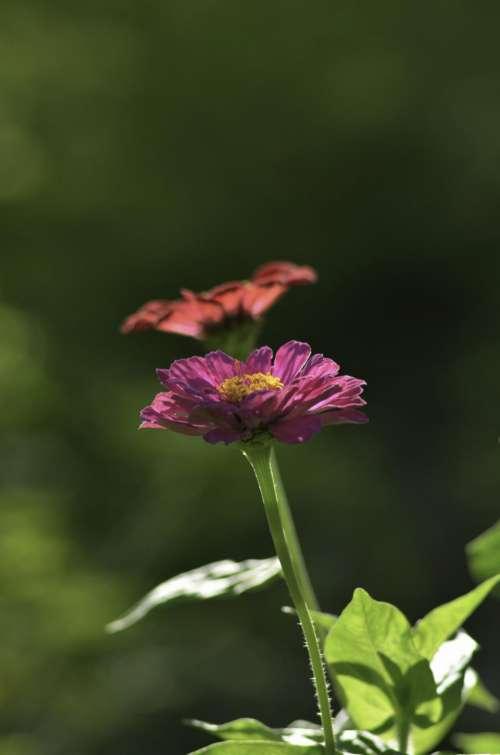 plant flower leaves bloom petals