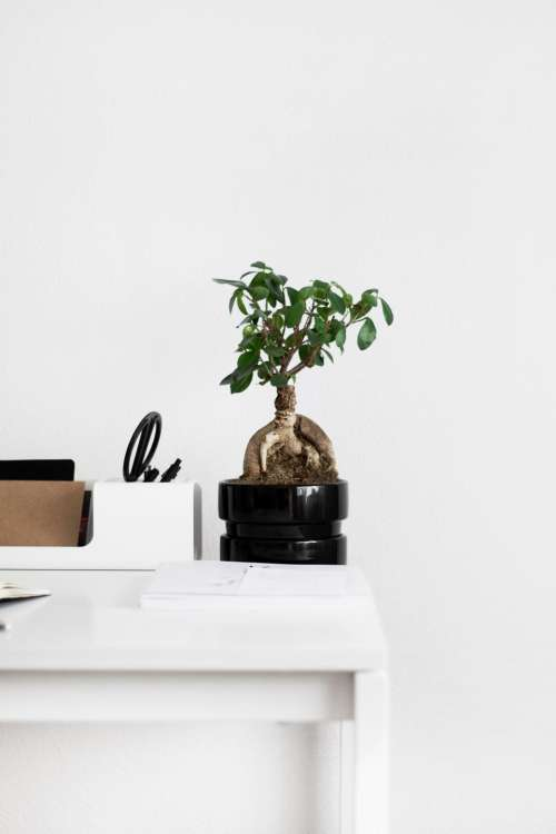 table notebook plant tree vase